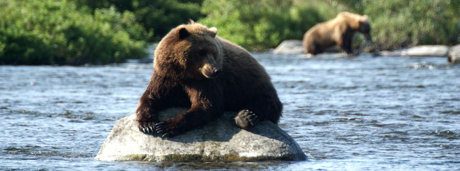 alaska bear photography